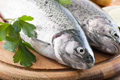 مشاهده محصولات ماهی